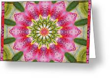 Healing Mandala 25 Greeting Card by Bell And Todd