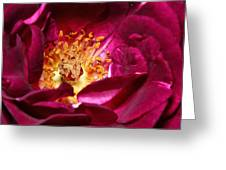Heart O' The Rose Greeting Card