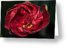 Heart Of A Hibiscus 2 Greeting Card