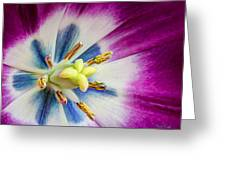 Heart Of A Tulip Greeting Card