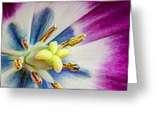 Heart Of A Tulip - Square Greeting Card