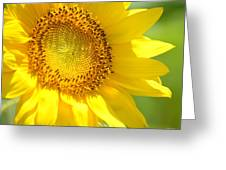 Heart Of The Sunflower Greeting Card