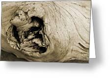 Heartwood - Sepia Tone - Wonderwood Collection - Olympic Peninsula Wa Greeting Card