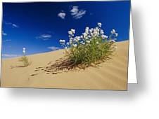 Hearty Wild Stock Wildflowers Growing Greeting Card