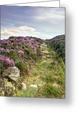 Heather On Simonside Hills Greeting Card