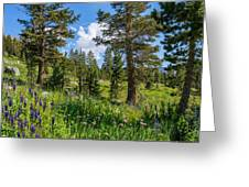 Heaven In The High Country Greeting Card