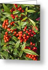 Heavenly Bamboo Red Berries Greeting Card