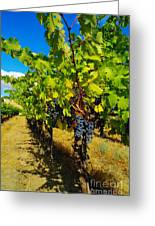 Heavy On The Vine At The High Tower Winery  Greeting Card