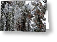Heavy Snow On Fall Trees Greeting Card