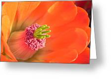 Hedgehog Cactus Flower Greeting Card