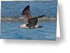 Heermanns Gull Greeting Card