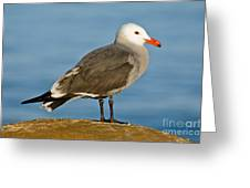 Heermanns Gull On Rock Greeting Card