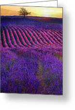 Height Of The Bloom Rolling Lavender Fields Greeting Card