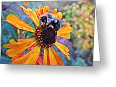 Helenium Bumble Bee Greeting Card