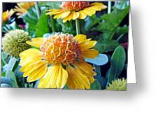 Helenium Flowers 1 Greeting Card