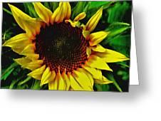Helianthus Annus - Sunnydays Greeting Card