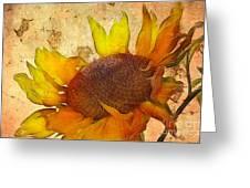 Helianthus Greeting Card