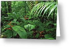Heliconia And Palms With Green Anole Greeting Card