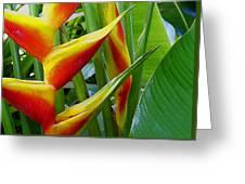 Heliconia Bihai Kamehameha Greeting Card