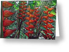 Heliconia Haven Greeting Card