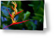 Heliconia -parrot's Beak I Greeting Card