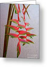 Heliconia Platystachys Greeting Card