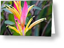 Heliconia Psittacorum Greeting Card