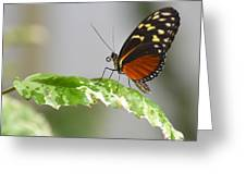 Heliconius Butterfly On Green Leaf Greeting Card