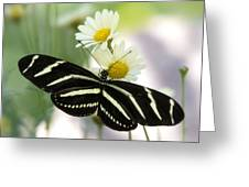 Heliconius Charithonia Greeting Card