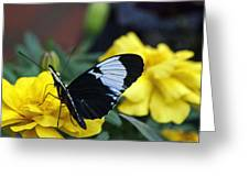 Heliconius Greeting Card