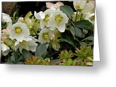 Hellebore And Friends Greeting Card