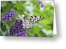 Hello Beauty Greeting Card