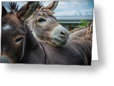 Hello Donkey Greeting Card