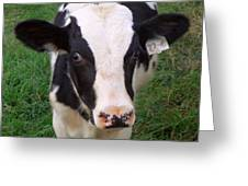 Hello My Name Is Cow Greeting Card