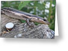 Hello Skink Greeting Card