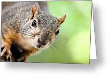 Hello Squirrel Greeting Card