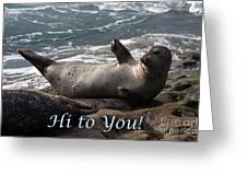 Hello To You Sea Lion Greeting Card