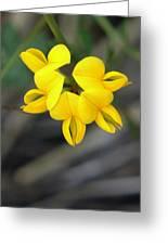 Hello Yellow Greeting Card