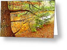 Hemlock And Beech Trees In Autumn Digital Art Greeting Card