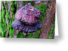 Hemlock Reishi Greeting Card