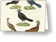 Hen-like Birds Of Hot Countries Greeting Card