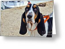 Henry The Basset Greeting Card