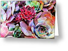 Hens And Chicks Series - Copper Tarnish  Greeting Card