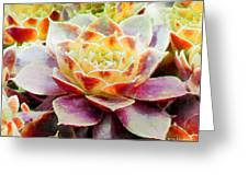 Hens And Chicks Series - Early Morning Quite Greeting Card