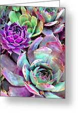 Hens And Chicks Series - Urban Rose Greeting Card
