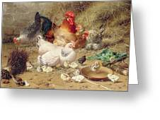 Hens Roosting With Their Chickens Greeting Card