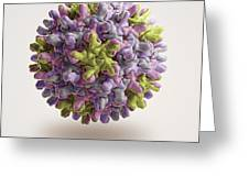 Hepatitis B Virus Greeting Card