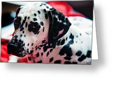 Her Eyes. Portrait Of Dalmation Dog. Kokkie Greeting Card