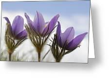 Heralding Spring  Greeting Card