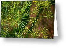 Herbal Abstract Greeting Card
